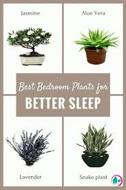 best bedroom plants if you want better sleep your bedroom shouldn t lack these 5