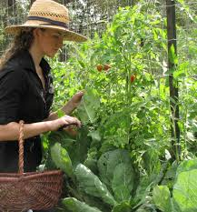 companion planting with tomatoes four string farm