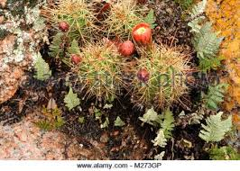 cactus and succulents in rock garden stock photo royalty free