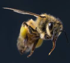 beer for a buzz minnesota bee boosters try to draw a new crowd