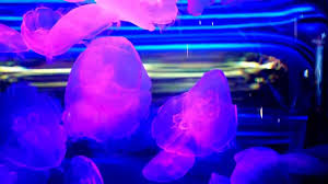 moon jellyfish with color changing neon lights youtube