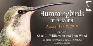 Arizona Wildlife Tours images Hummingbirds of arizona tour jpg