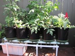 cara membuat cairan hidroponik cara menanam hidroponik sederhana di pekarangan