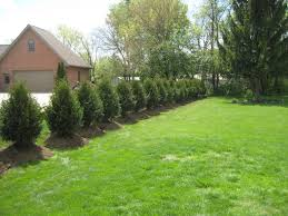 indiana evergreen shade flowering trees indiana affordable trees