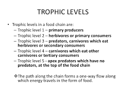 what travels through a food chain or web images Trophic levels 12 728 jpg cb jpg