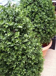 Fake Shrubs 100 Large Artificial Topiary Trees Diy Lighted Topiary