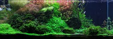 tobias coring and aquascaping aqua rebell