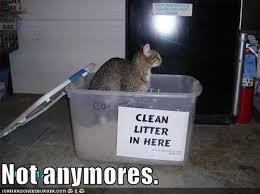 Funny Kitten Memes - funny kitten memes check out 10 funny kitten in a box memes