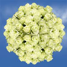 global roses beautiful light green roses for delivery global