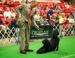 belgian sheepdog national specialty 2014 dog show 2014 10 26