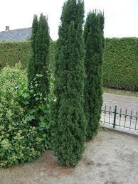 trees space gardening