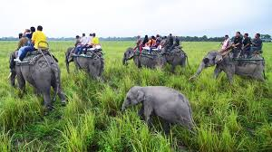 Five Blind Men And The Elephant Kaziranga The Park That Shoots People To Protect Rhinos Bbc News