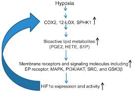 ijms free full text aberrant lipid metabolism promotes