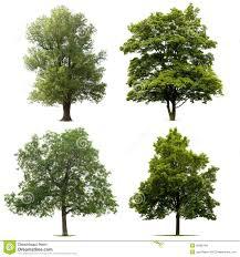 isolated trees royalty free stock image image 29085166