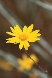 10 drought tolerant native plants southern living