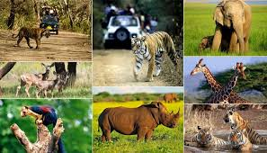 wildlife tours images Book wildlife tours from vacation trip india to visit national parks jpg
