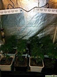 Tangies Kitchen Icemud U0027s Led Grow The Tangie Pheno Hunt Page 9