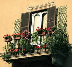 gorgeous balcony with beautiful flowers and climbing plants