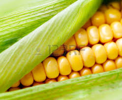 corn on the cob images u0026 stock pictures royalty free corn on the