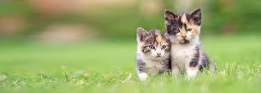 veterinarian in bel air md cat sense feline hospital