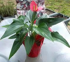 low light houseplants good house plants low light and low light flowering house plants