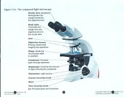 compound light microscope parts and functions using a compound light microscope lab answers www lightneasy net