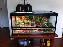 how to make fish tank decorations at home best 25 snake terrarium ideas on pinterest reptile enclosure