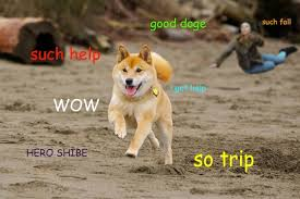 How To Make A Doge Meme - doge memes illegal image memes at relatably com