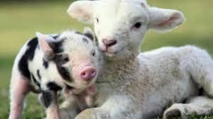 imagenes de animales y cosas petition update en portugal los animales han dejado de ser cosas