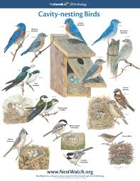 free nesting birds poster bird free and bird houses