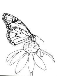 coloring page butterfly monarch great monarch activities for kids wild ones