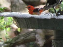 Sunsport Gardens Family Naturist Resort - forest hills club home facebook