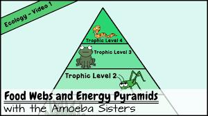 food webs and energy pyramids bedrocks of biodiversity youtube