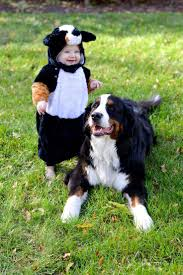 best 25 cute dog costumes ideas on pinterest puppy costume