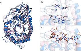 kinetic analysis and molecular modeling of the inhibition