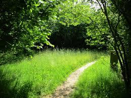 rolfs farm mayfield sussex tn20 6rp u2013 national garden scheme