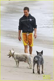 jogging with australian shepherd 92 best i love cattle dogs images on pinterest australian cattle
