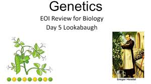genetics eoi review for biology day 5 lookabaugh ppt download