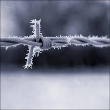 barbed wire and frost photograph by david turner
