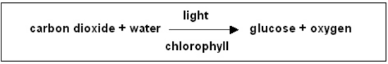 photosynthesis and respiration cellular life processes