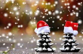 free photo christmas firs snow trees funny free image on