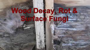 White Mildew In Basement Wood Decay Rot U0026 Surface Fungi Youtube