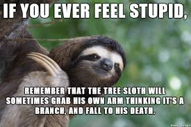 Make A Sloth Meme - 20 seriously hilarious sloth memes to make your day better word
