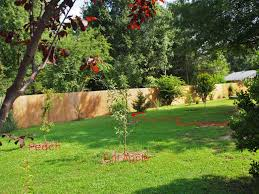stunning small backyard orchard pictures design ideas gardening