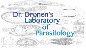 birds laboratory of parasitology