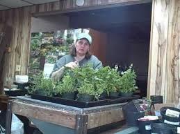 growing herbs indoors under lights harvesting herbs that were grown indoors under lights youtube