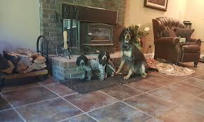 7 month old bluetick coonhound bluetick coonhound coonhounds www bluetick1kennels com blueticks