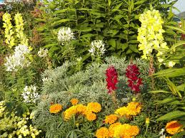 gardening tips for beginners capital garden services
