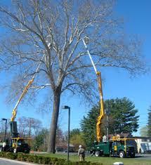 contact the haupt tree company tree plant care ma ct ny