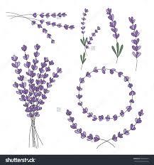 lavender drawing search lavender lavender